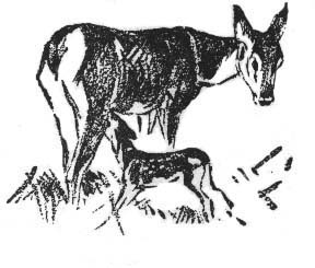 Bambi with his mother