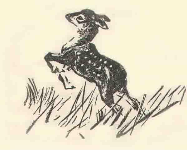 Bambi leaping