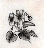 Illustration of forget-me-nots from a German-American autograph book